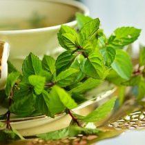 consum ceai verde
